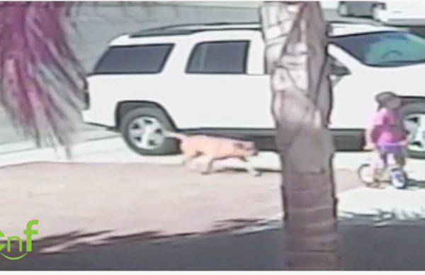 4歳の子供が犬に襲われて飼い猫が猛烈タックル