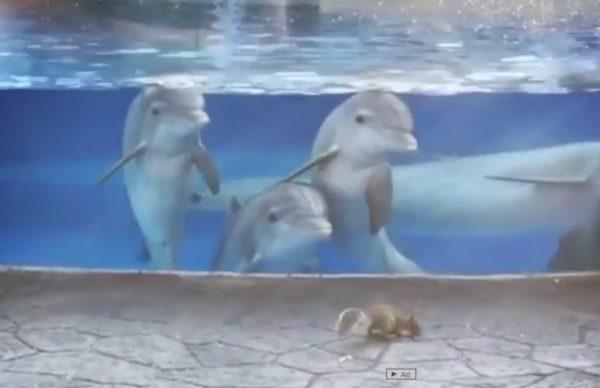 初めてリスをみたイルカが可愛すぎる!!!