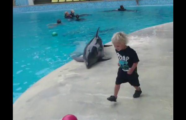 子供とボールで遊んであげるイルカ