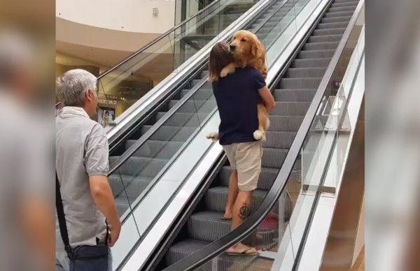 エスカレーターが怖い犬