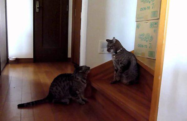 とばっちりをうける猫