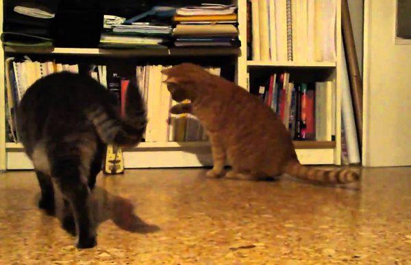 メトロノームに興味津々だけど条件反射が止まらない猫