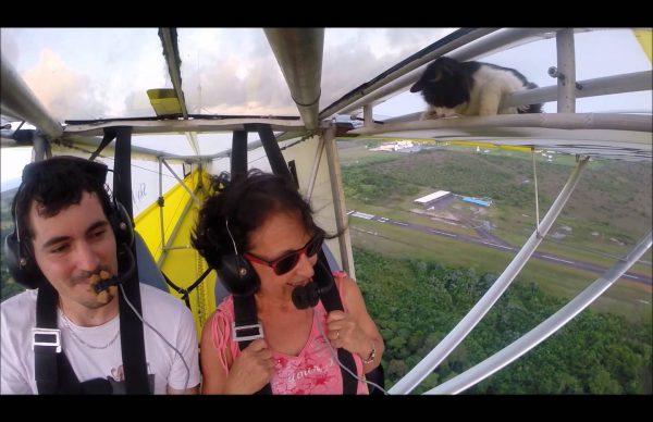 小型機の翼に隠れていたネコが離陸直後に現れびっくり